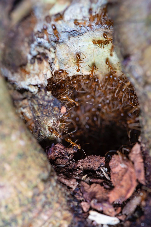 mravenčí skupina