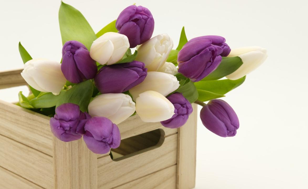 tulipány v boxu
